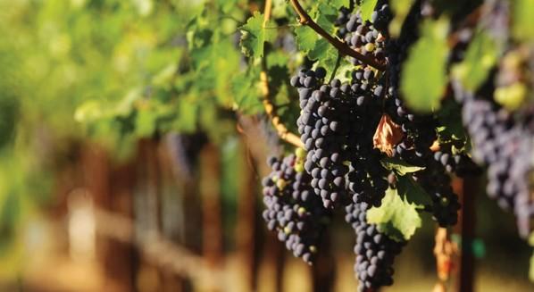winebudou